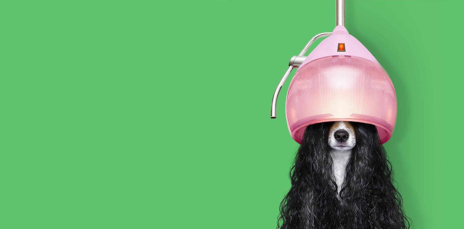20FUENFZEHN Kreativagentur - Slider Motiv - Hund
