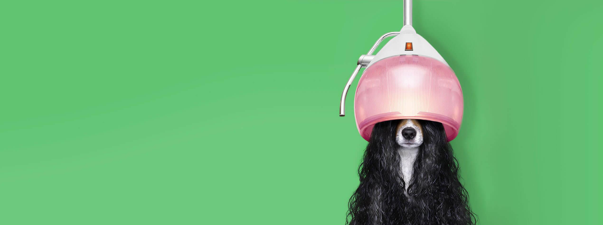 20FUENFZEHN Kreativagentur - Slider Motiv - Hund - Wide